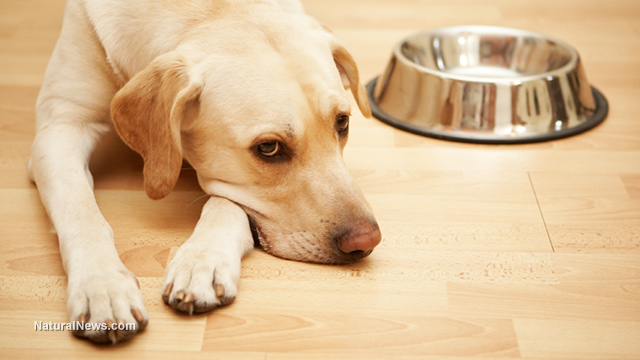Alert: US dog food recalled after discovered to contain fatal dose of euthanasia drug