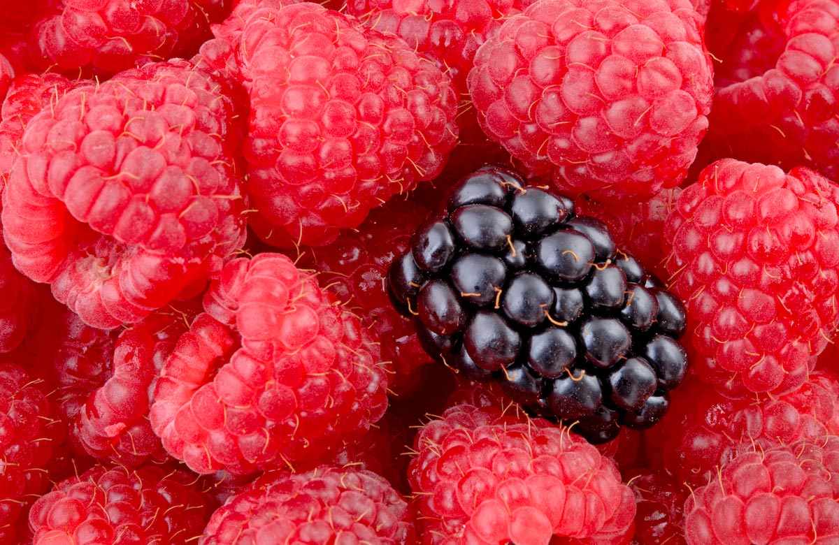This often forgotten berry has some amazing health benefits